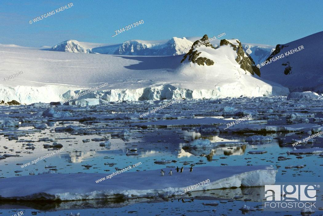 Imagen: ANTARCTIC PENINSULA AREA, MOUNTAINS AND PACK ICE, ADELIE PENGUINS ON ICE FLOE.