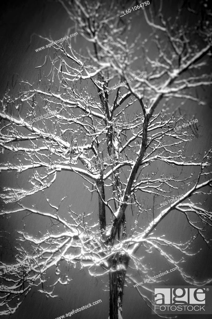 Stock Photo: Snow in Tree.