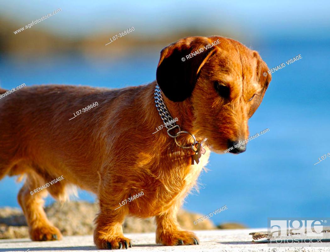 Stock Photo: Small dog. Costa Brava near Barcelona. Spain.