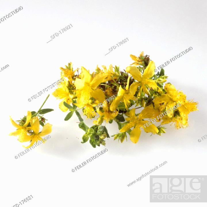 Stock Photo: Flowers of St. John's wort.