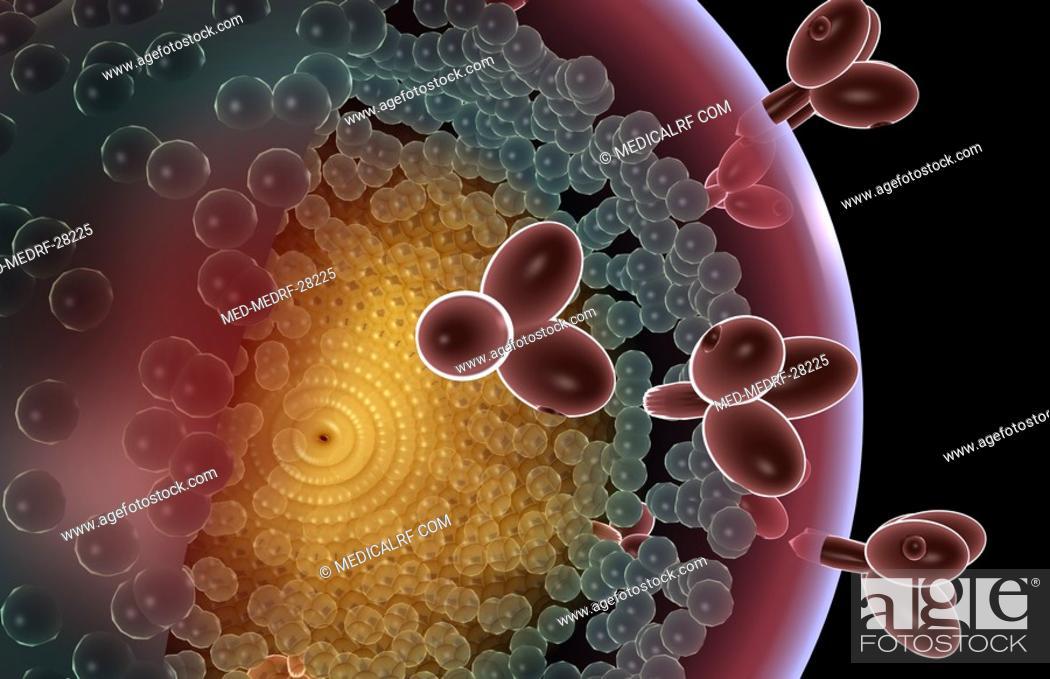 Stock Photo: HIV structure.