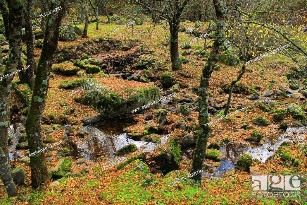 Stock Photo: The Aguilón river seen from the path leading to the El Purgatorio falls in Autumn, at the Guadarrama Summits national park boundaries, Rascafría (Madrid).