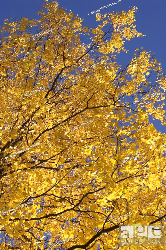 Stock Photo: Bending, Branch, Day, Falling, Golden.
