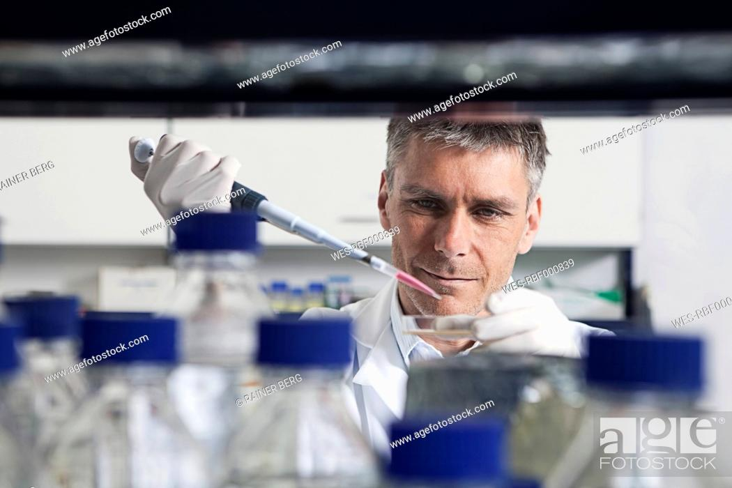 Stock Photo: Germany, Bavaria, Munich, Scientist pouring liquid with pipette in petri dish for medical research in laboratory.