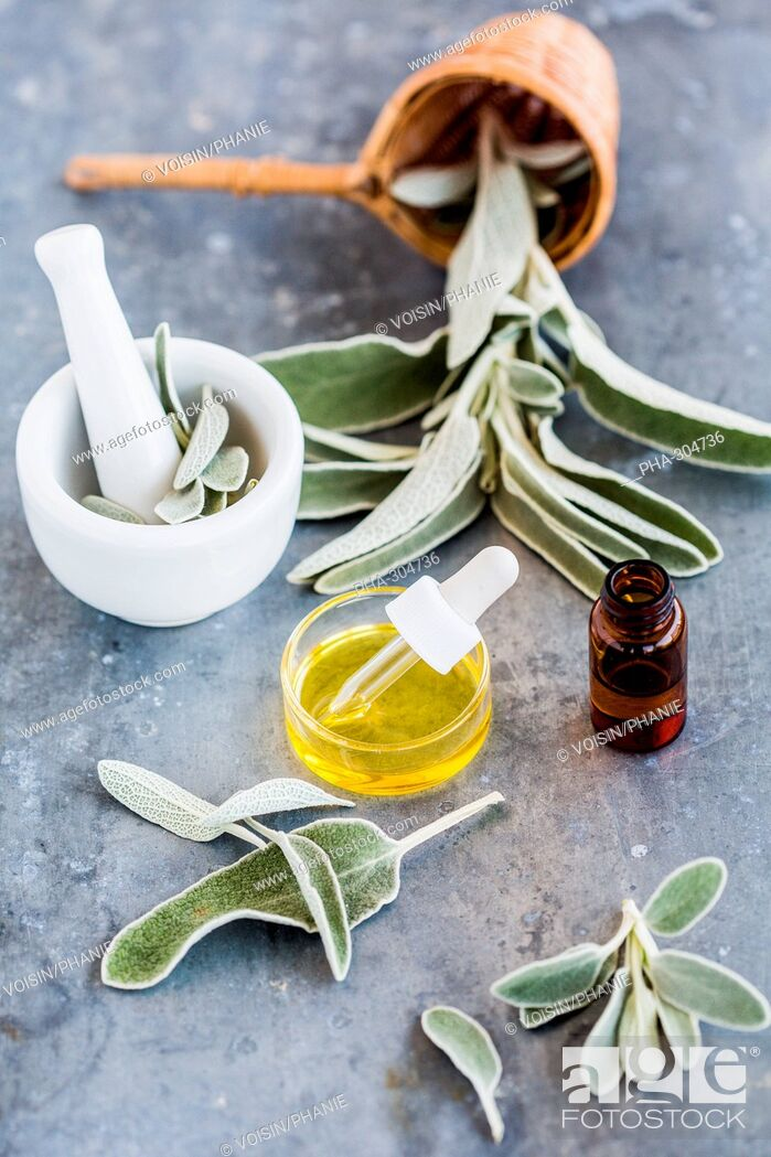 Stock Photo: sage essential oil.