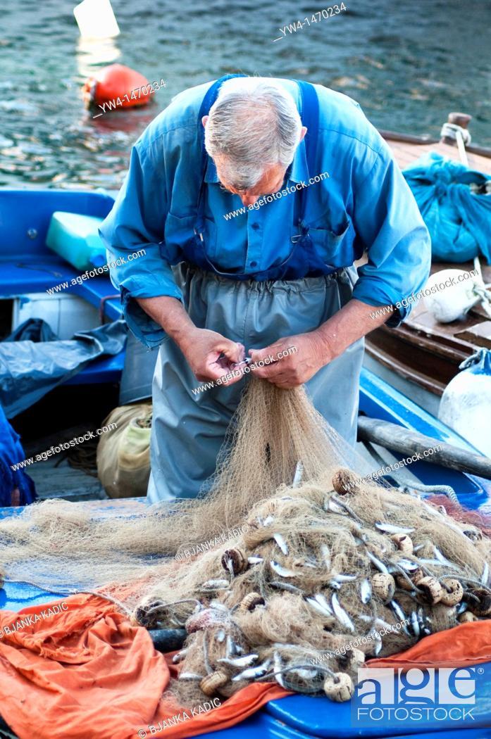 Stock Photo: Fisherman disentangling just caught fish from his net, Cavtat, Croatia.
