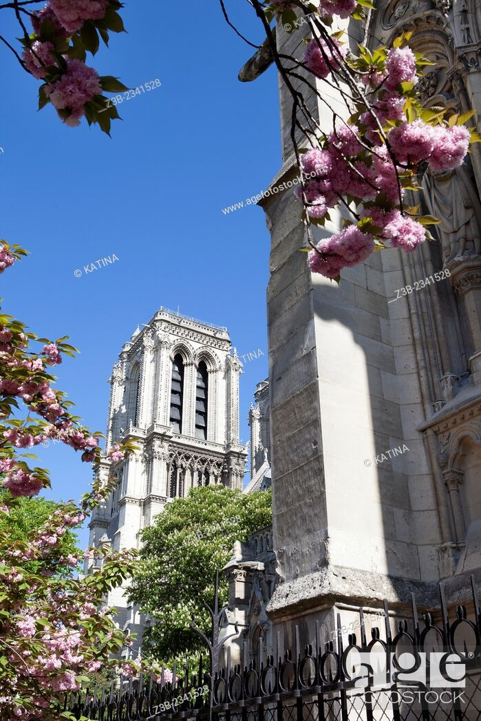 Stock Photo: View of Notre Dame Cathedral through cherry blossoms in spring from Notre Dame Park, Ile de la Cite, Paris, France.
