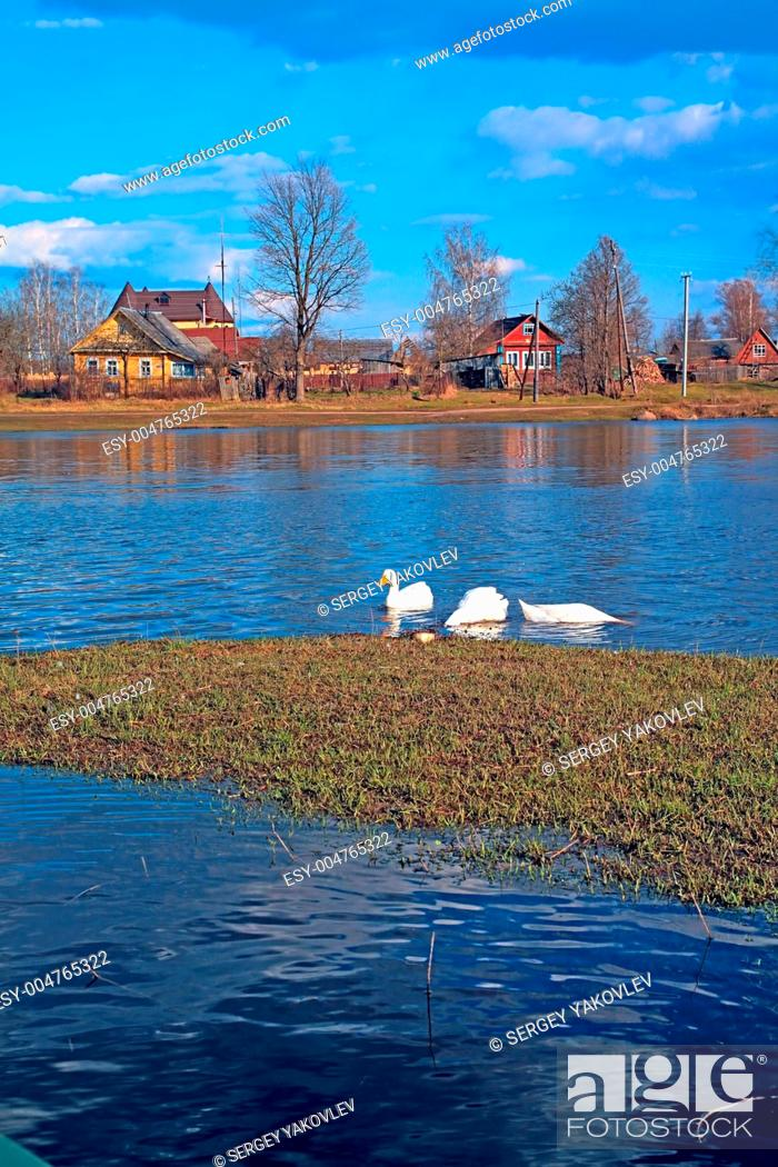 Stock Photo: geese on river.