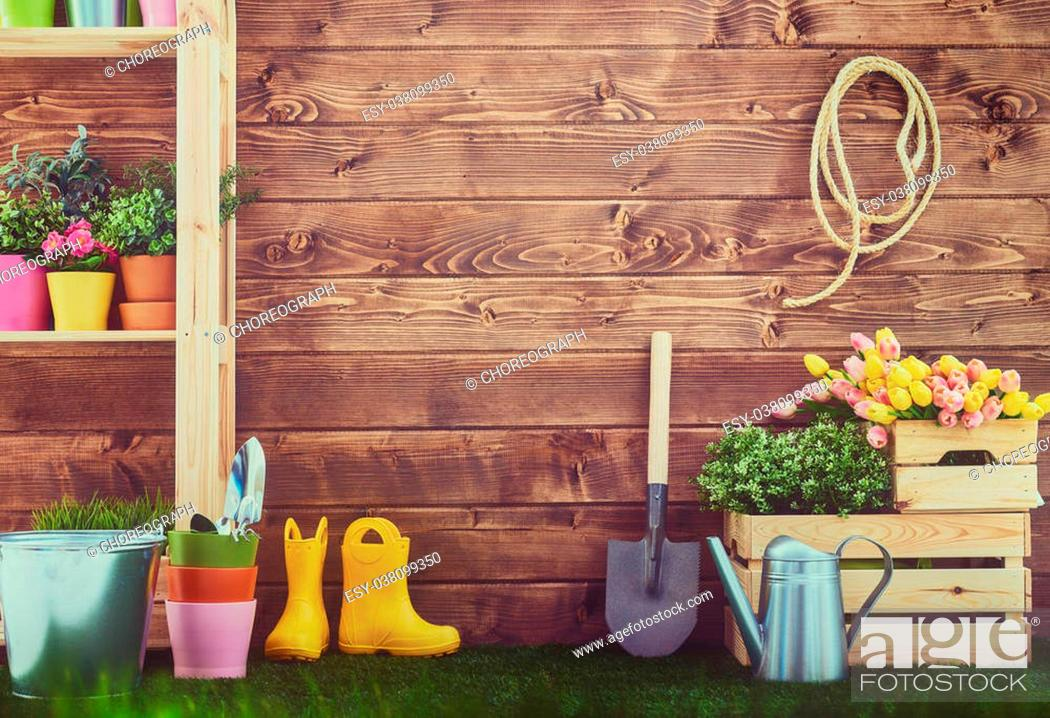 Stock Photo: Gardening tools and on the grass in the backyard. Fresh flowers and plants in the spring.