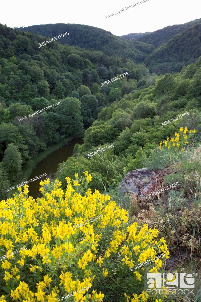Stock Photo: Flowers, valley, wood, river, hill.