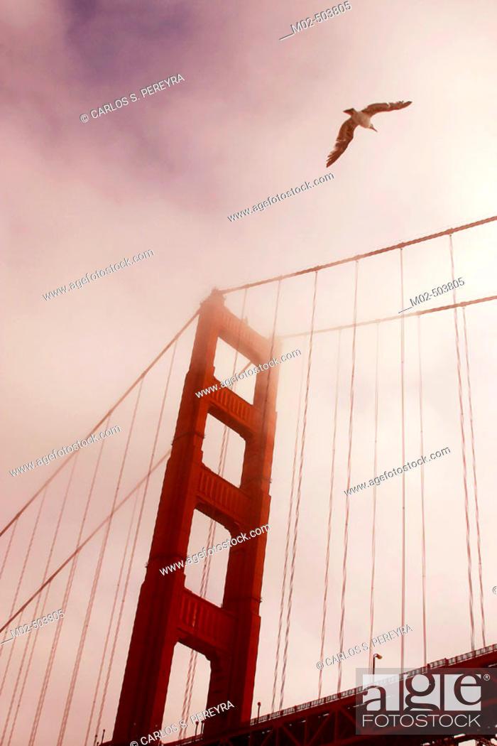Stock Photo: Golden Gate bridge. San Francisco. California. USA.