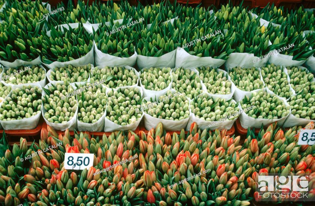 Stock Photo: Flower shop, Amsterdam, Holland.