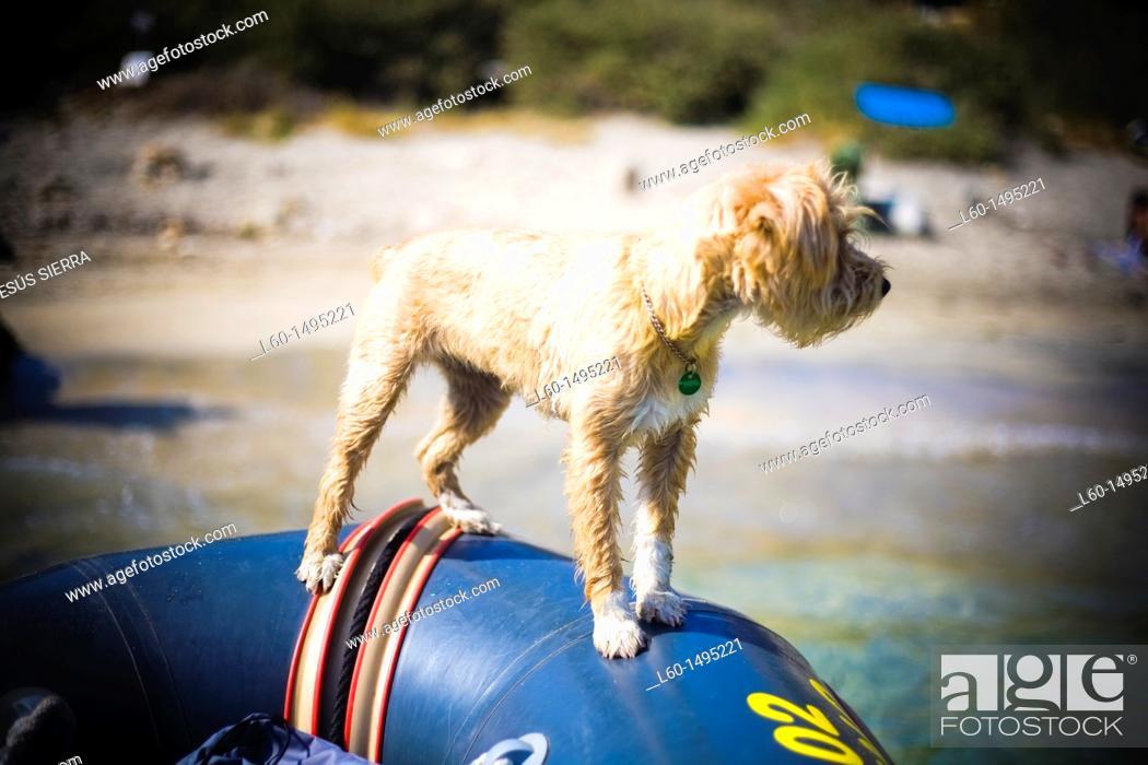 Stock Photo: Dog in Cabo de Gata, Almeria, Spain.