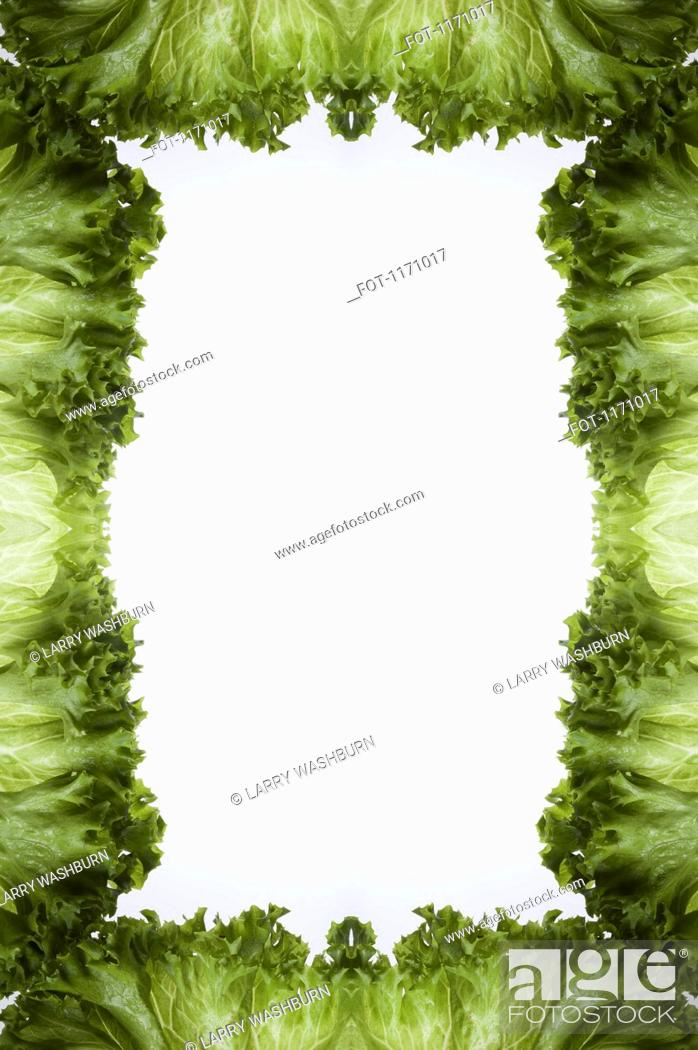Stock Photo: Leaves of green leaf lettuce arranged into a frame on a light box.