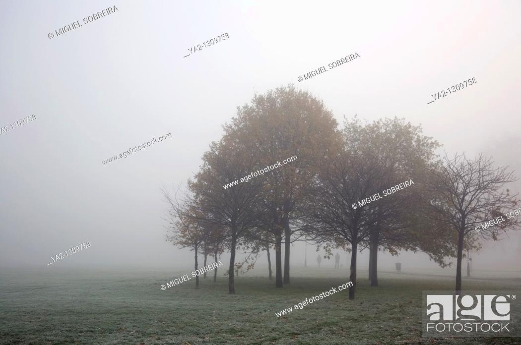 Stock Photo: Foggy Clapham Common.
