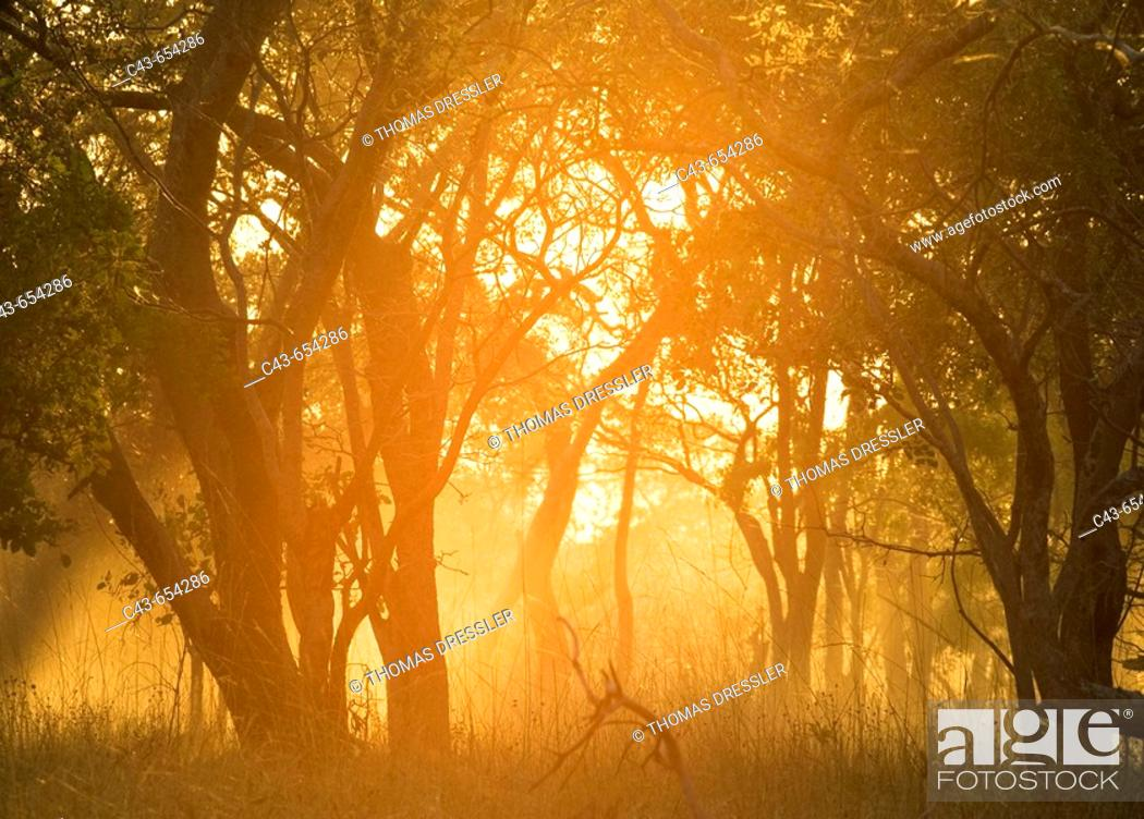 Stock Photo: Zambia. Morning atmosphere with dust raised by a vehicle driving on a sandy track. Kafue National Park, Zambia.