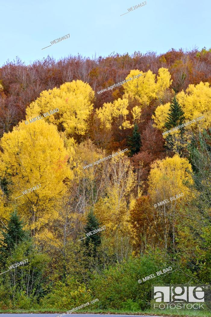 Stock Photo: Decidual forest in autumn. Close to Irati area. Navarre, Spain, Europe.