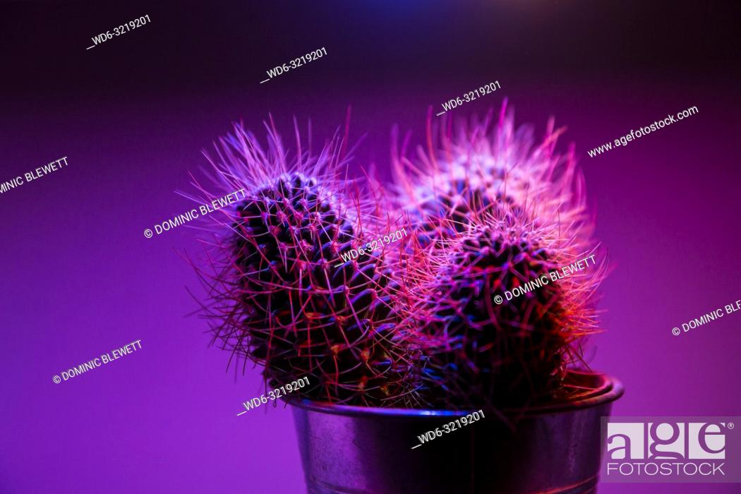 Imagen: A small cacti in a bar in Berlin, Germany.