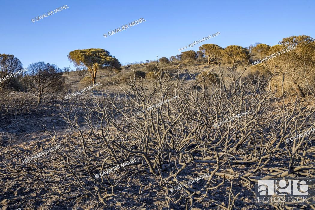 Stock Photo: France, Var, Ramatuelle, landscape destroyed by the flames on hills in front of Cape Taillat after the fire of July 25th, 2017.