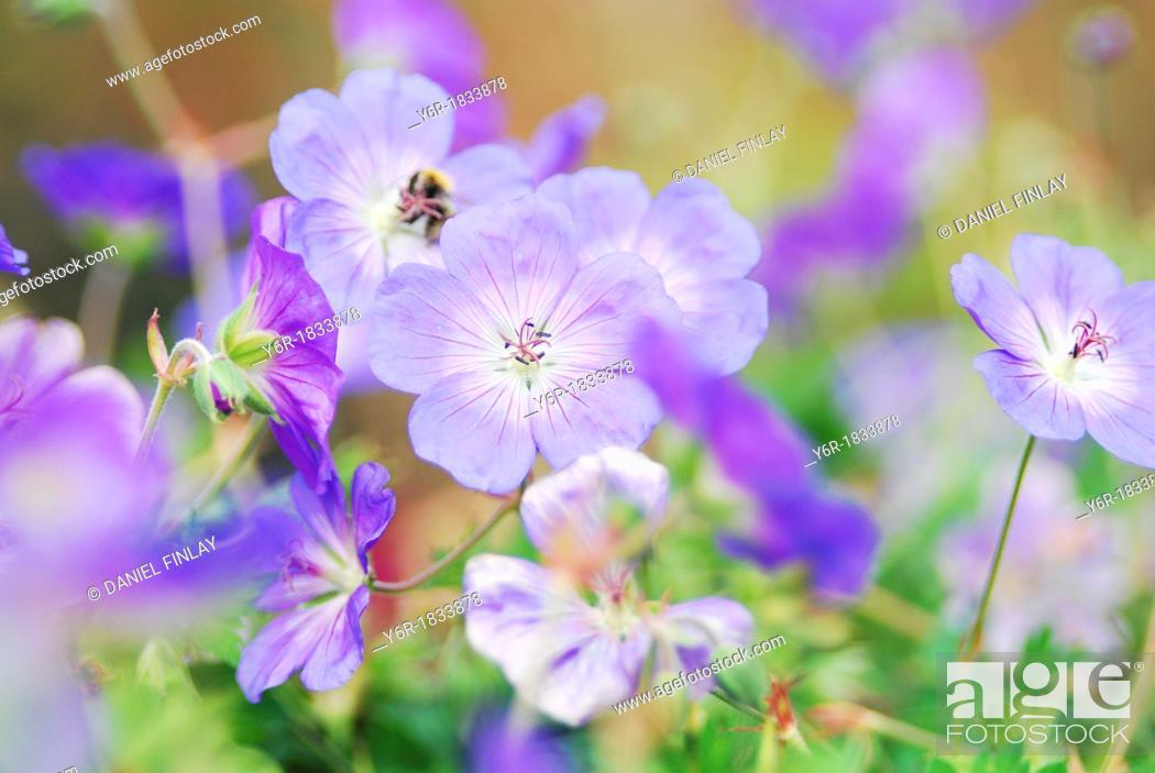 Stock Photo: London flower blur.