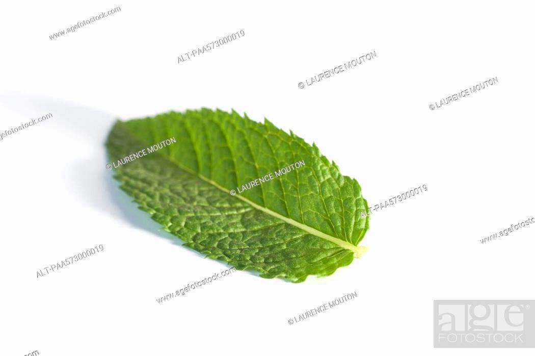 Stock Photo: Mint leaf.