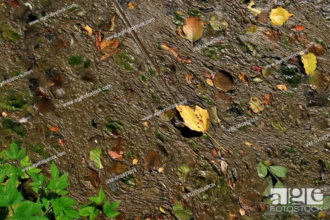 Stock Photo: wetness, wet, leaf, green, mud, muddy.