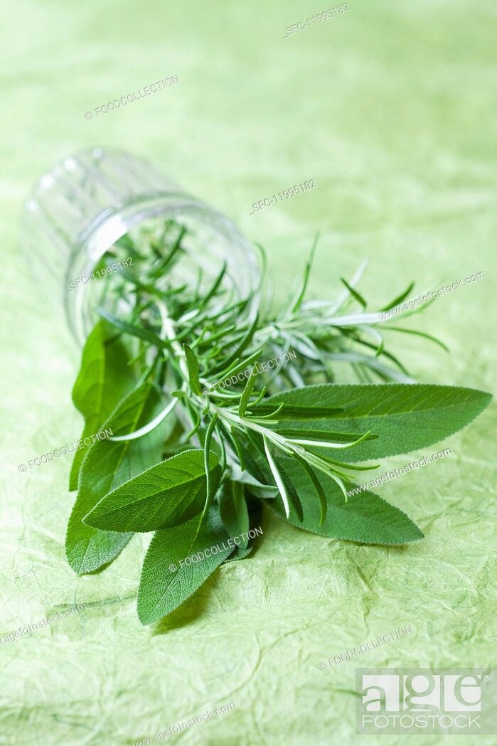 Stock Photo: Fresh sage and rosemary in a glass on its side.
