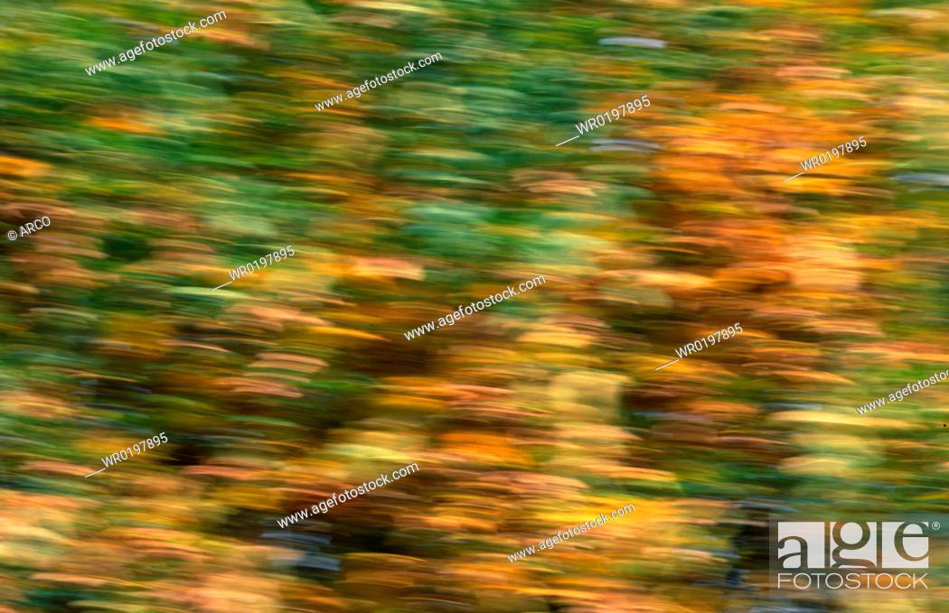 Stock Photo: Autumn, foliage, Germany.