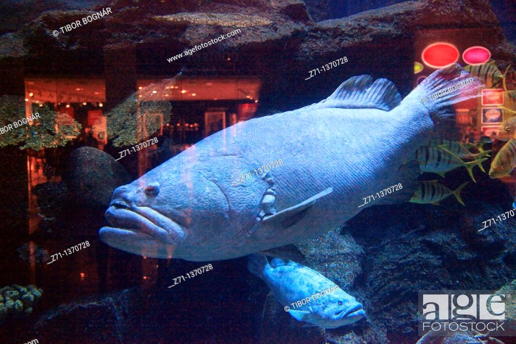 Stock Photo: United Arab Emirates, Dubai, Dubai Mall, Aquarium.
