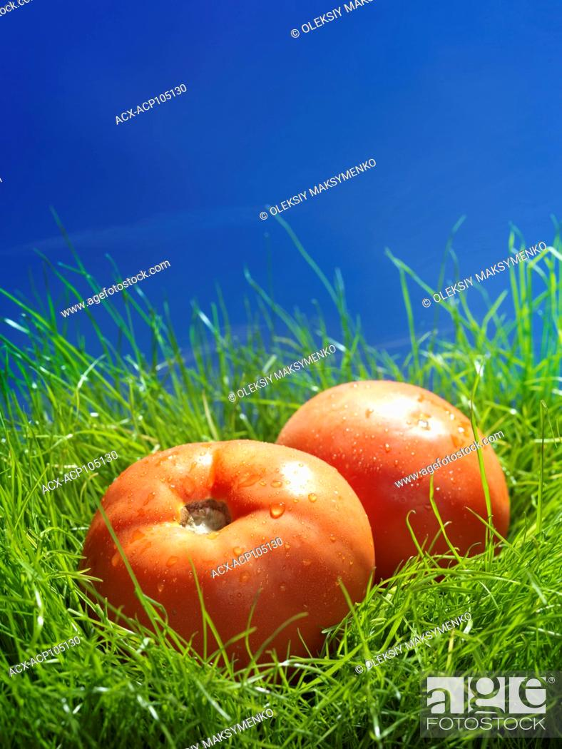 Stock Photo: Two organic field tomatoes in green grass under blue sky artistic food still life.