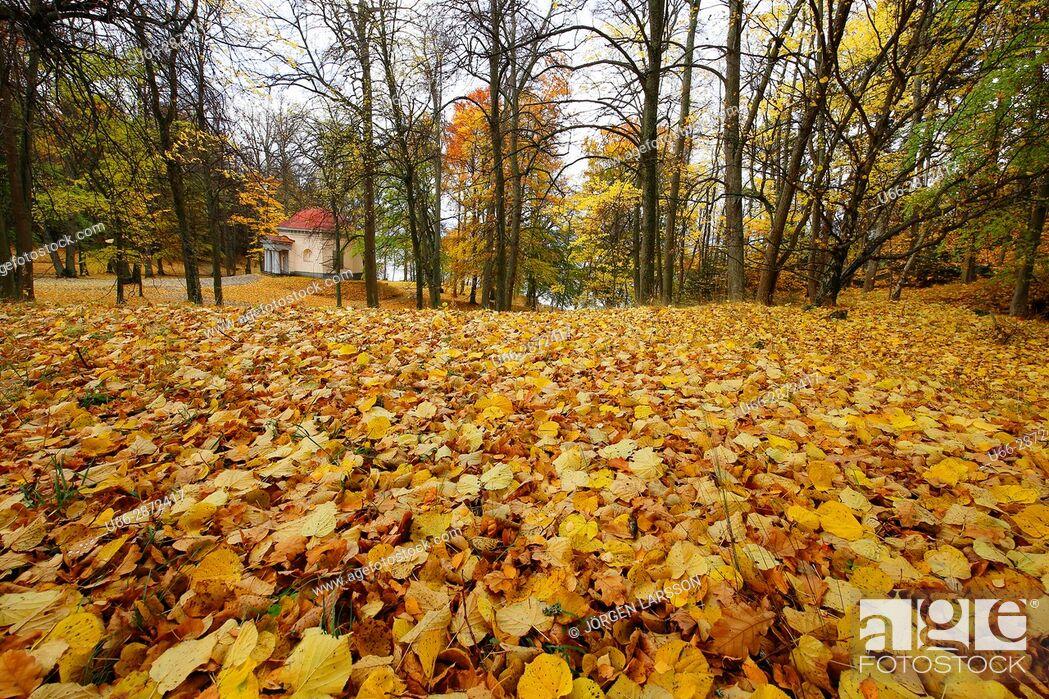 Stock Photo: Trees among yellow leaves, Botkyrka, Stockholm, Sweden.