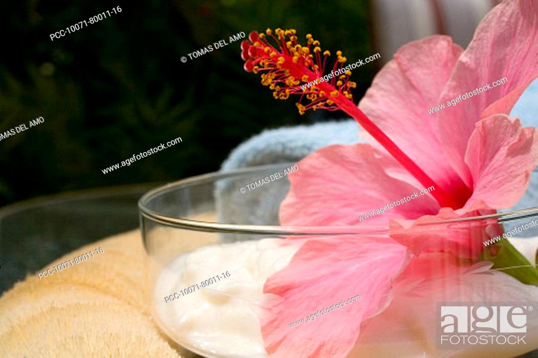 Stock Photo: Spa elements, glass bowl filled with white cream, garnished with pink hibiscus.