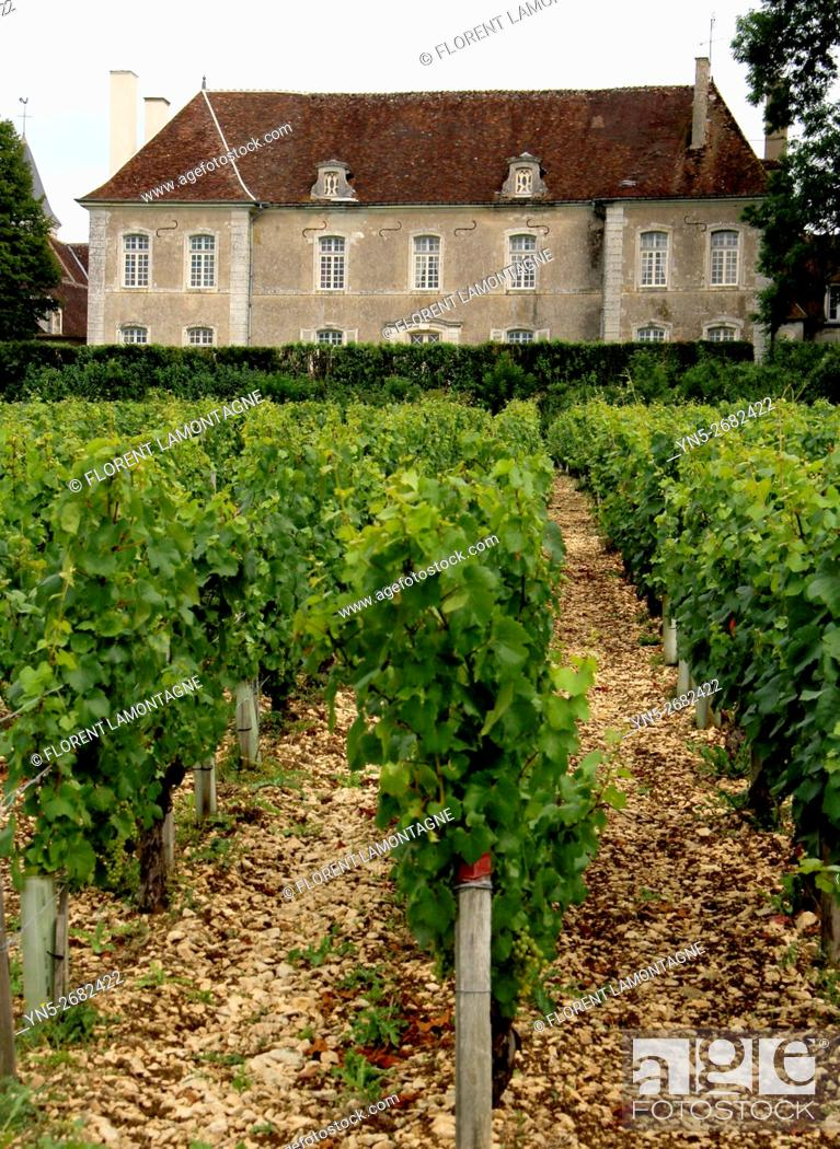 Stock Photo: France, property of Chateau castle of Beru in Yonne departement in Burgundy known for it famous Chablis wine.