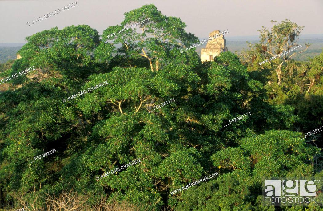 Stock Photo: Temple of the Great Jaguar. Tikal Maya ruins. Yucatan. Guatemala.
