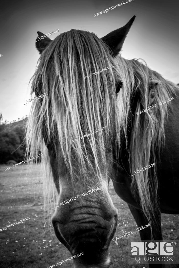 Stock Photo: Portrait of a horse next to the monastery of San Antolin de Bedon, Llanes, Asturias, Spain.