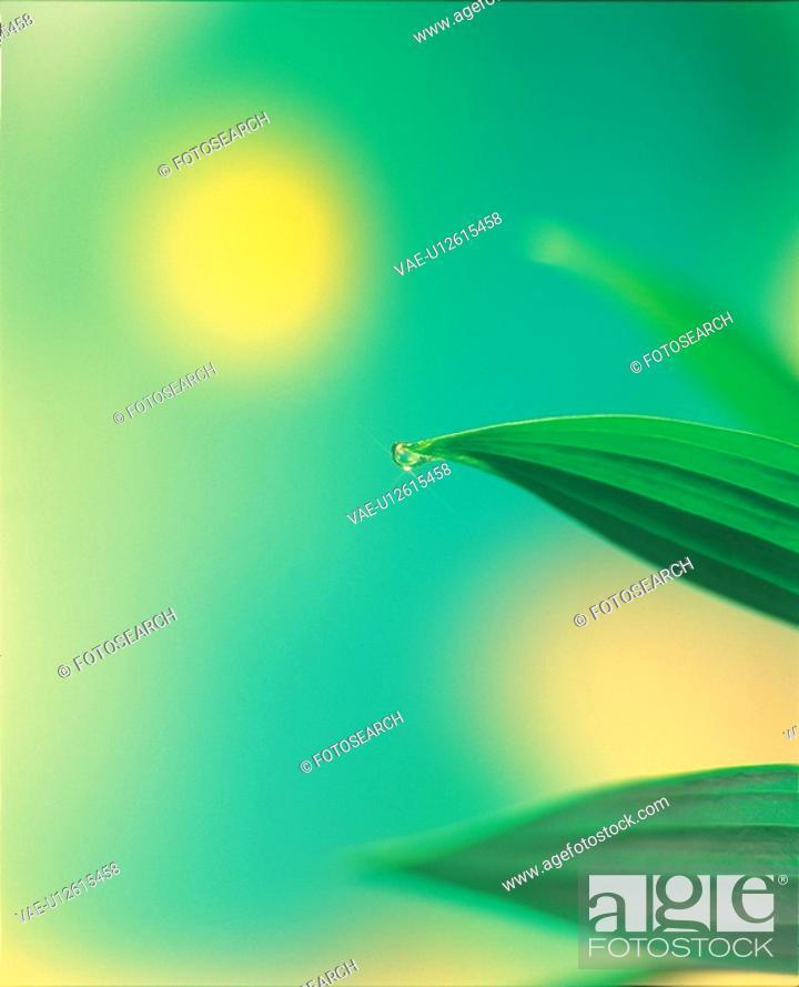 Stock Photo: leaf, waterdrop, plants, plant, dew, water.