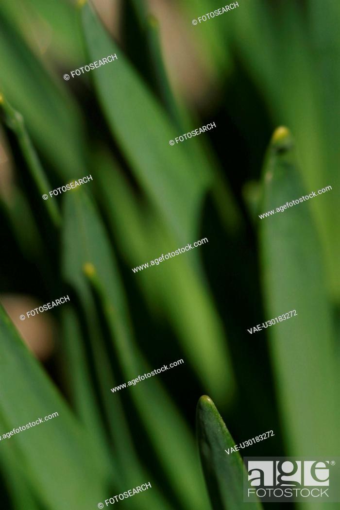 Stock Photo: vegetation, yield, organic, foliage, outdoors, close-up.
