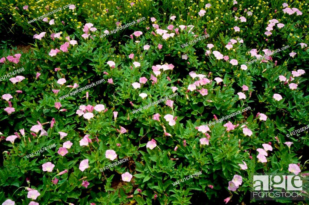 Stock Photo: flower bed, nature, flowers, flower, scene, plant, landscape.