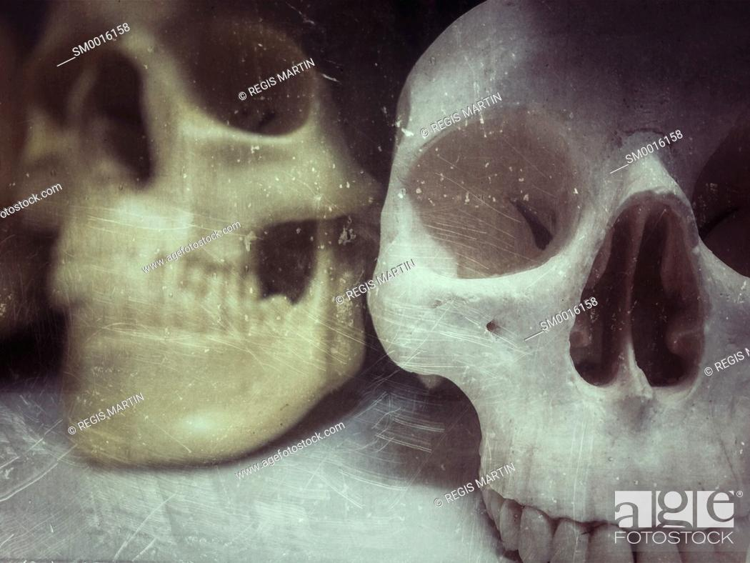 Stock Photo: plastic human skulls, used to teach medical students.