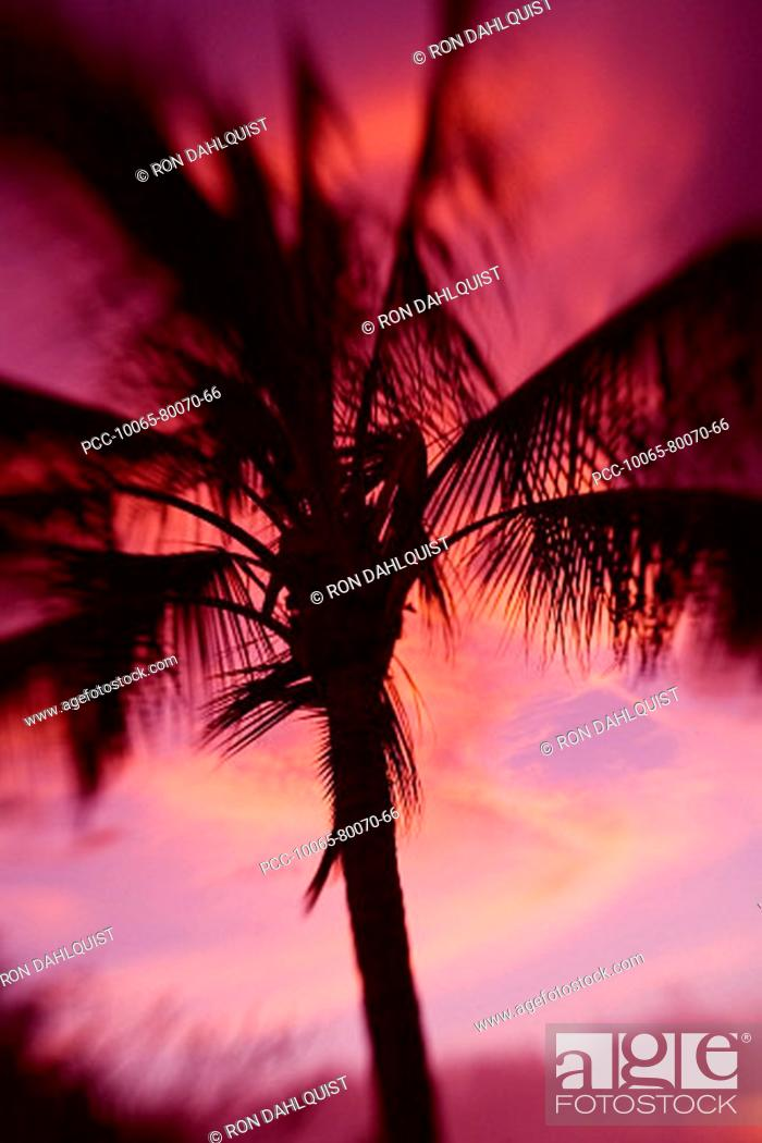 Stock Photo: Hawaii, Palm tree silhouette with pink clouds at sunset.