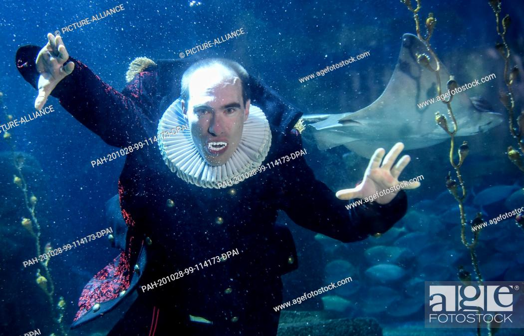 Stock Photo: 28 October 2020, Berlin: At Sea Life Berlin a diver in a vampire costume dives together with fish in the Atlantic basin. The reason for this is the upcoming.