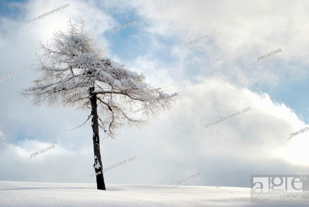Stock Photo: solitary tree in the snow.