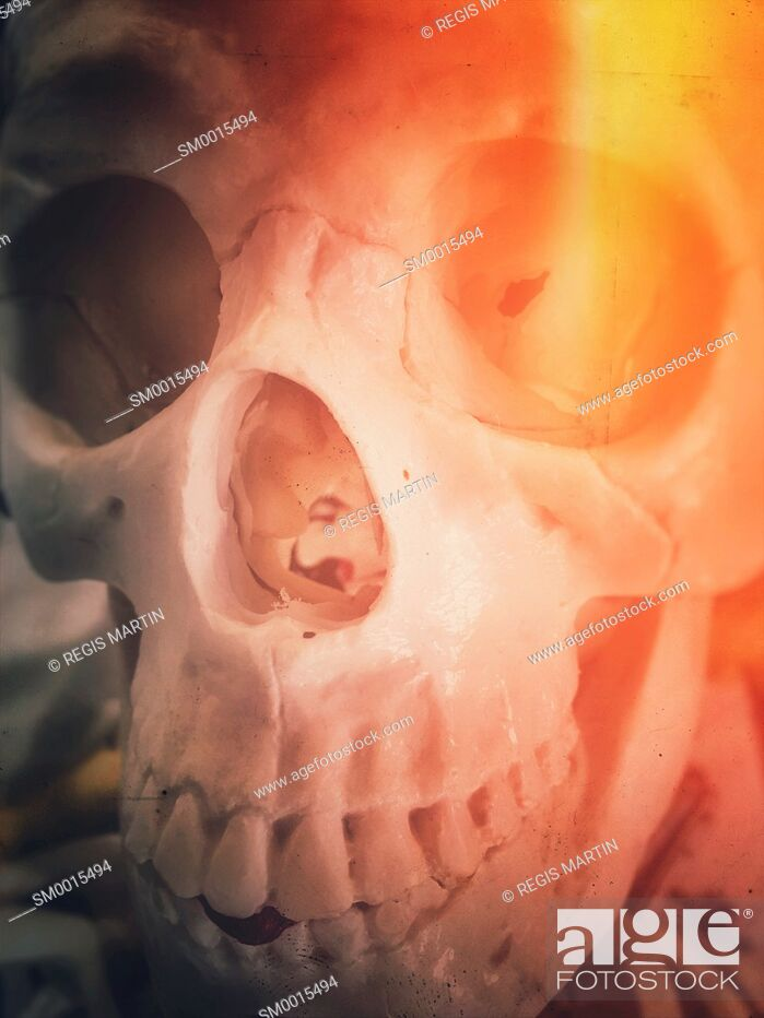 Stock Photo: closeup of a plastic human skull, with light flare.