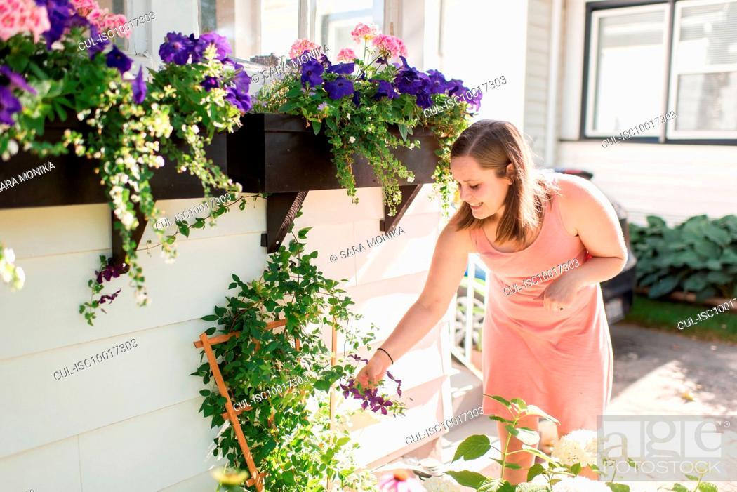 Stock Photo: Woman tending to flowers in garden.
