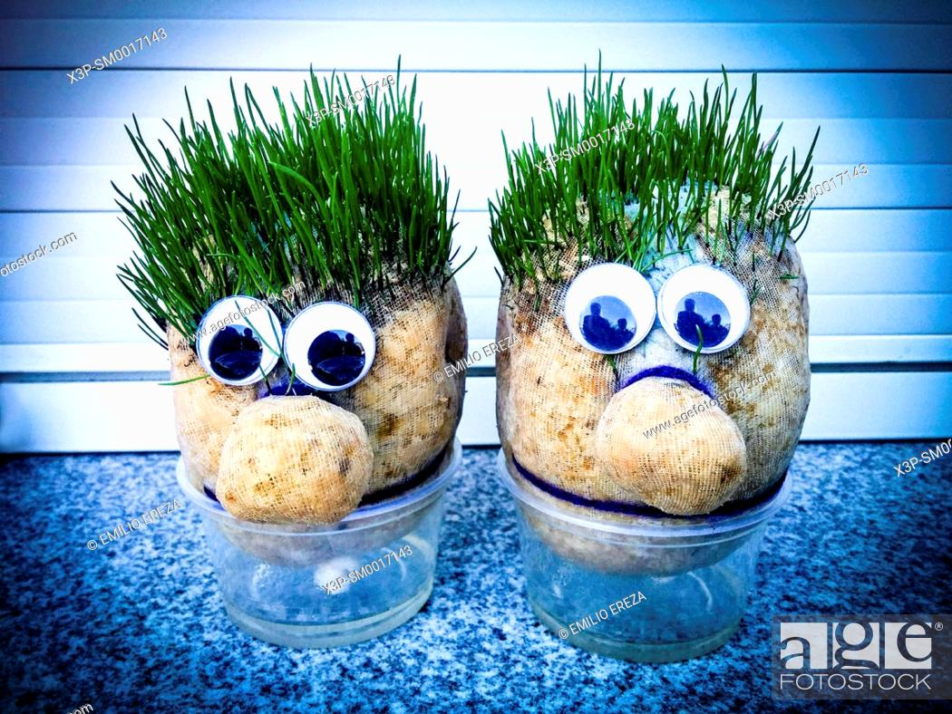 Stock Photo: Grass dolls.