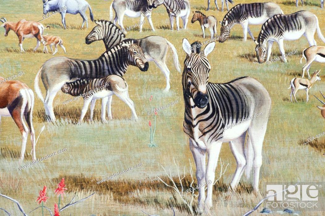 Stock Photo: Painting of quaggas Equus quagga quagga, extinct zebras from South Africa, in the California Academy of Sciences.
