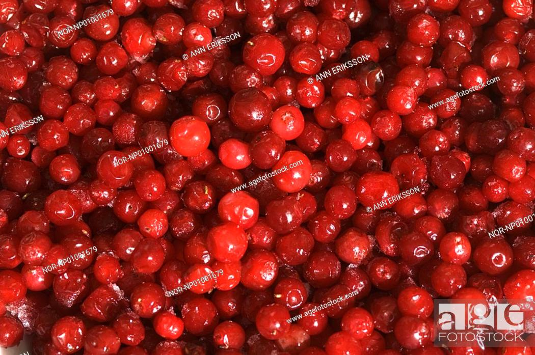 Stock Photo: Close-up of a heap of cherries.