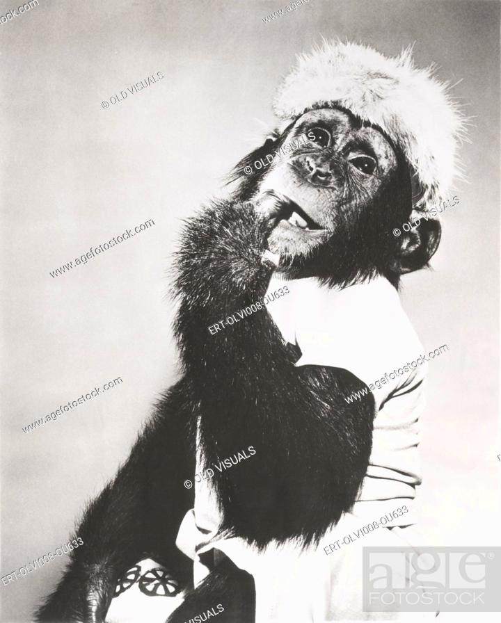 Stock Photo: Monkey in coonskin cap deep in thought.
