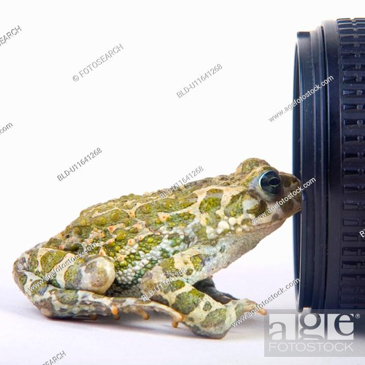 Stock Photo: animals, curiosity, close, camera, alfred.