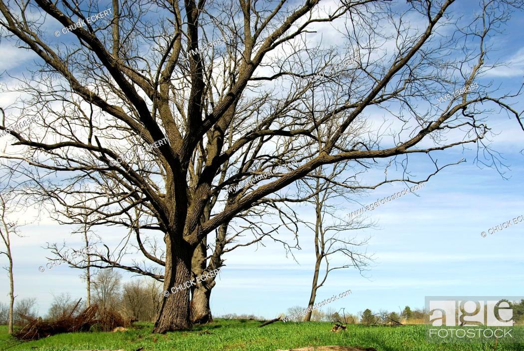 Stock Photo: Spring oak tree on hillside.